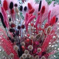 Какие сухоцветы самые красивые?