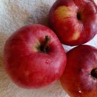Малина дружит с яблоней
