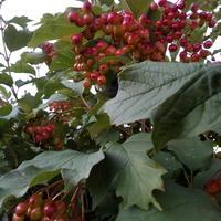 Что делать осенью с листвой. Два секрета