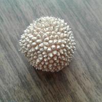 Вопрос вопросов. Чей это плод?
