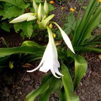 Помогите распознать цветок