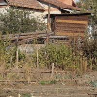 Каким декоративным плетущимся растением можно закрыть соседские постройки?