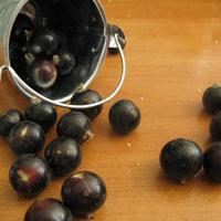 """Смородина черная """"Жемчужина"""" - ягоды крупные, как вишня"""
