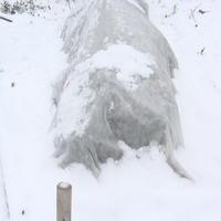 Хранение лука-порея зимой: простой способ с ведрами