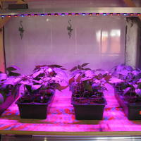 Фитолампа — опыт двухгодичного использования, важные советы по выращиванию под ней рассады