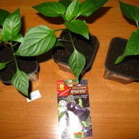 Удобрения и рассада, или Стоит ли морить растения голодом