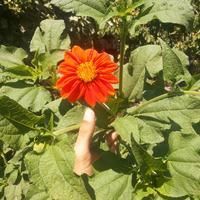 Подскажите, что это за растение? Многолетнее или однолетнее? Ка за ним ухаживать?