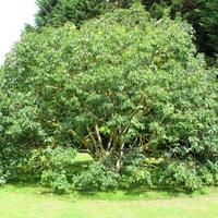 """Кто может поделиться опытом """"букетной"""" посадки деревьев?"""