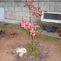Какое это растение?