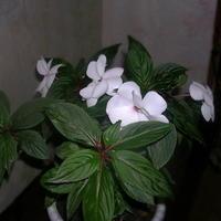 Мой любимый цветок