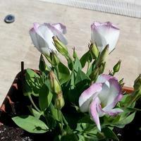 Помогите определить название цветов