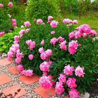 Заходите в гости в мой маленький сад...