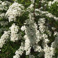 Аромотерапия в саду - лучший секрет отличного настроения