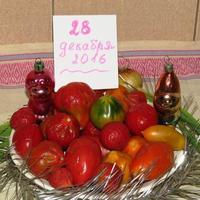 Сдюжили помидорки до Нового года