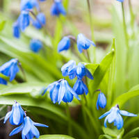 Цветочная весна в моём саду