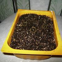ТОП-3 нового, что я узнала о покупном почвогрунте