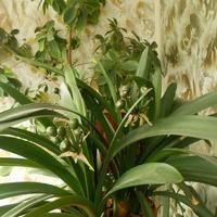 Немного о цветущих растениях...