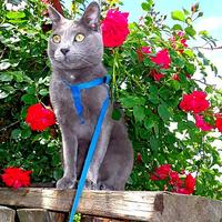 Любимый уголок в саду для кота Витаса