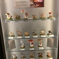 Изучаем финские грибы, или Особенности национальной тихой охоты