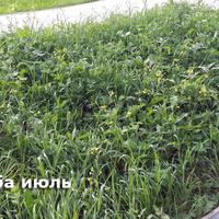 Записки новых дачников, 2016 г. Лето: что посеять поздно весной, чтобы быть с цветами летом