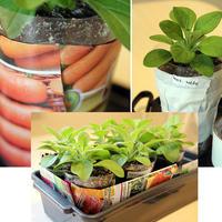 Апгрейд прозрачных стаканов за минуту: 3 способа уберечь корни от света