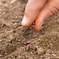 Что посеем, что пожнем? Выбираем семена овощей для подзимнего посева