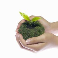 Освободим растения от горшков! Новый тренд флористической моды