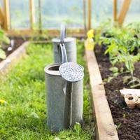Неприятные заболевания томатов: корневые и прикорневые гнили