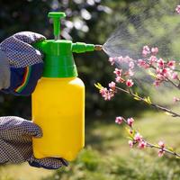 10 самых ранних вредителей: как не пропустить первую обработку сада