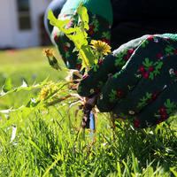 Как сорняки захватывают наши сады. Успешные способы борьбы с ними
