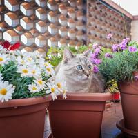 Как отвадить кошек от мест, им не предназначенных