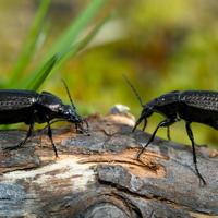 Санитары сада: как не перепутать полезных насекомых с вредителями