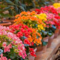 Ковёр из цветов