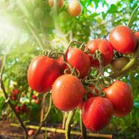 Как победить неурожай и стимулировать образование плодов