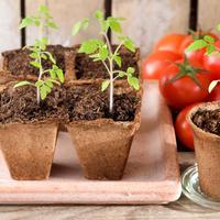 Урожай по расписанию. Как применять ретарданты и ингибиторы