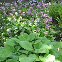 Что посадить в тени? 37 эффектных находок для вашего сада