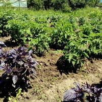 Огород – первый год
