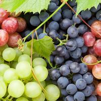 О пользе винограда, или Виноград бывает разный – синий, желтый, зеленый, красный…