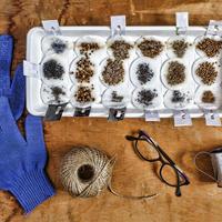 8 лучших препаратов для предпосевной обработки семян