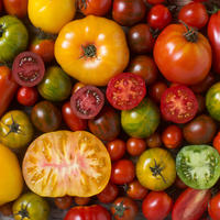6 лучших сортов томатов — рекомендует агрофирма Аэлита