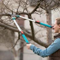 Обрезка в плодовом саду: дайджест полезных материалов сайта