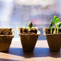 Почему не всходят семена: 6 вероятных причин неудачи с посевами