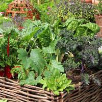 Как сэкономить место в огороде: овощной конвейер — на каждой грядке