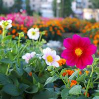 Городская садоводческая акция «Давай клумбу!» приглашает неравнодушных москвичей
