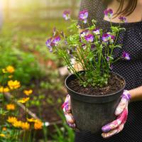 Красота спасет мир? Все для красивого сада и его очаровательной хозяйки в магазинах Fix Price