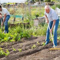 Садовые помощники для всей семьи: экономим силы и время