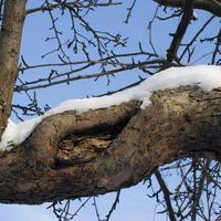 Чем опасно дупло и как помочь дереву?