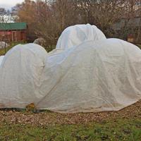 К холодам готовы? Выбираем материалы для зимнего укрытия растений