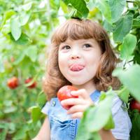 """Полезные и вкусные томаты: лучшие сорта селекции Агрохолдинга """"Поиск"""""""