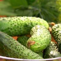 Секреты долгого плодоношения огурцов и беспроигрышный рецепт засолки (видео)